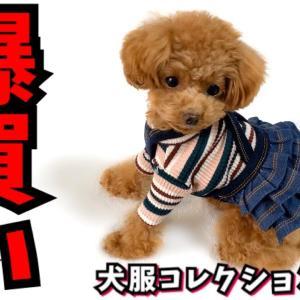 安くてかわいい犬の服、またたくさん買ってしまった【トイプードルのコロン】 #犬動画 #かわいい犬 #わんこ