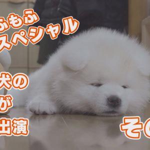 秋田犬のもふもふ子犬スペシャル!その② #犬動画 #かわいい犬 #わんこ