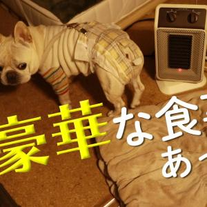 戸惑いを隠せない犬の可愛い仕草 French bulldog フレンチブルドッグ #犬動画 #かわいい犬 #わんこ