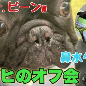 フレブル友達とオフ会!無視され続けても健気にちょっかいかける愛犬がかわいすぎたw【後編】【フレンチブルドッグ】 #犬動画 #かわいい犬 #わんこ