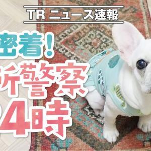 台所に必ずくる我が家の可愛い警察犬【フレンチブルドッグ】【French bulldog puppy】 #犬動画 #かわいい犬 #わんこ