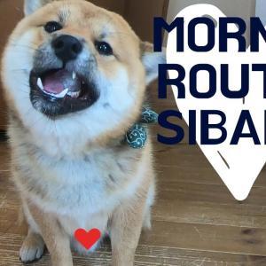 【モーニングルーティン】柴犬おにぎりくんのやんちゃでかわいい朝。 #犬動画 #かわいい犬 #わんこ