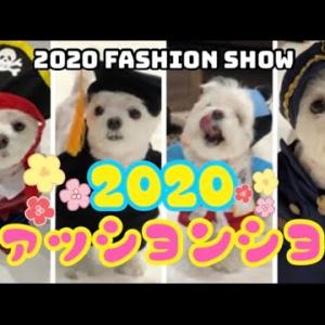 【超かわいい!】マルチーズの子犬がお気に入りの服を集めて2020年ファッションショーを開いてみた!2020 fashion show #犬動画 #かわいい犬 #わんこ