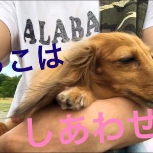 ミニチュアダックスフンド ドライブデート①予定外ドライブデート😆 #犬動画 #かわいい犬 #わんこ