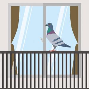 『マンションの屋上の鳩対策』教えていただけませんか?