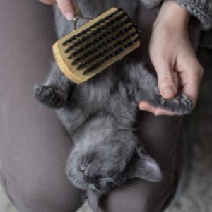 ロシアンブルーと遊ぶなら猫じゃらしがオススメ?遊び方のコツは?