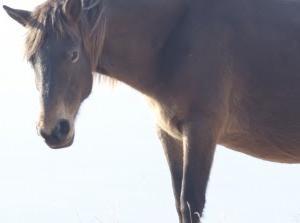 地球上の野生馬がすでに絶滅していたことが明らかに