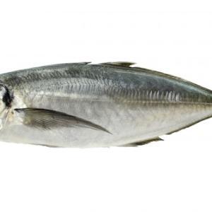 石器時代の人たちが、肉ではなく魚を大量に食べていたことが判明