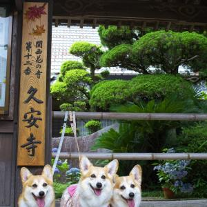 久安寺であじさい散歩