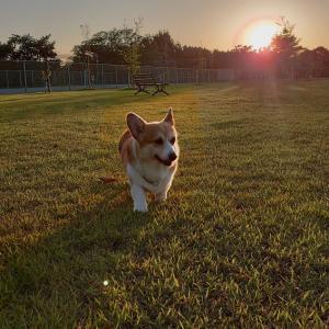 特別メニューの夕暮れ散歩