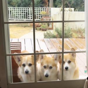 犬の映画を2本