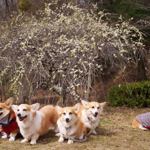 三木山散歩