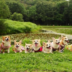 7月の三木山散歩