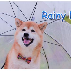 雨の日はどうしてる? 梅雨とわんちゃんのお散歩について