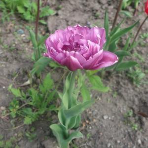 続 雑草の中のお花。
