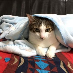 やっぱり毛布は気持ちいい♡