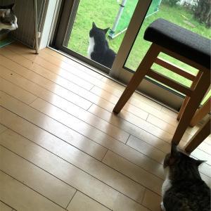 またもやマリオが勝手に家の中に入ったニャン(^-^;