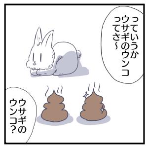 ウサギのウンコ