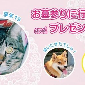 【キジトラ】愛猫のお墓参り/プレゼント企画第2弾!