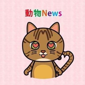 【動物News Pickup】2020年10月26日(月)