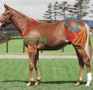 馬の見方 特別編 自分が相馬をするうえで特に注目している所