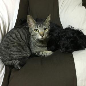 犬と猫、どっちも飼うことは可能?仲良しに暮らすには?