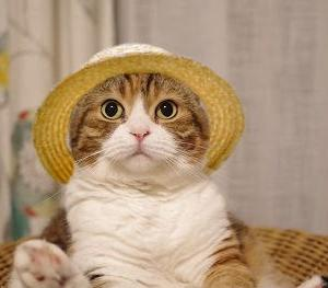 こなつと麦わら帽子