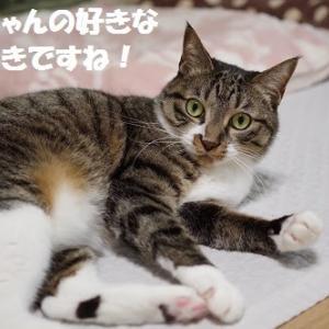 世界ネコ歩き 「房総・千葉」