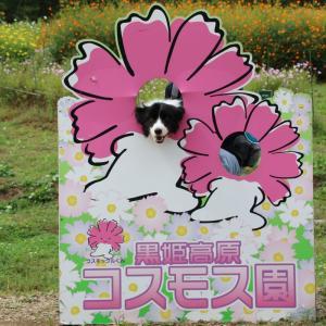 【信州 黒姫高原】コスモス・ダリア園でグリーンシーズン最高の風景を満喫してきました