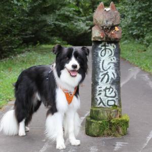 【信州 黒姫高原】童話の森で水辺探し散歩