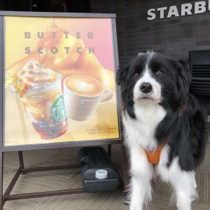 【スタバ】ロースタリー 東京1周年企画|ロースタリー 東京で人気のラテをアレンジしたバタースコッチ コーヒー ジェリー フラペチーノ®