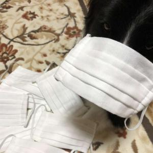 【ハンドメイドプリーツマスク】市販のマスクが無い!ガーゼも無い!丸ゴムも無い!なので、家にあるものでマスクを作ってみました