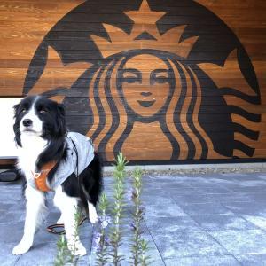 【スタバ新店】日本三大夜桜で有名な高田公園目の前にOPENした「スターバックスコーヒー上越高田城址公園店」に行ってきました