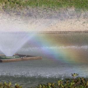 内濠に見つけた虹