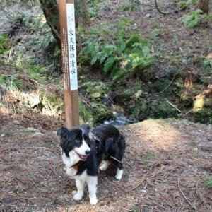 【Part71】新たな新潟県の名水になった三条市下田「大久保の清水」と北五百川で出会った春の山野草たち