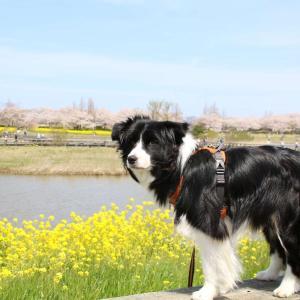 春の上堰潟公園散歩