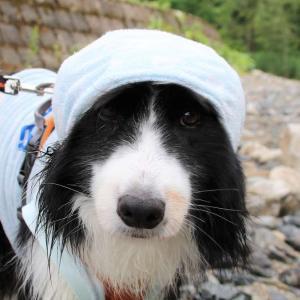 お笑い二足歩行犬と川遊び