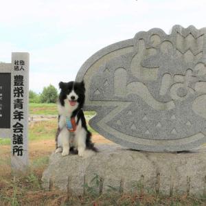 どんばす池のDawn太 【新潟市北区】福島潟オニバス池にて2021