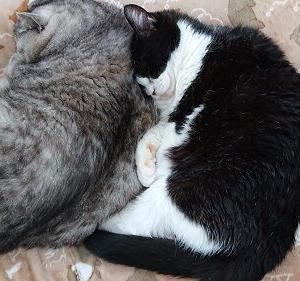 外の世界を知らない猫は、不幸せ?