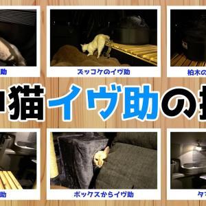車中泊仕様にしてベンガル猫を探索させてみた