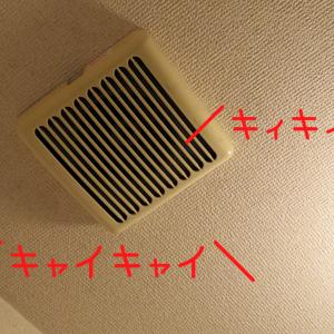 """天井から聞こえる""""キャイキャイ""""""""キィキィ""""という音の正体"""