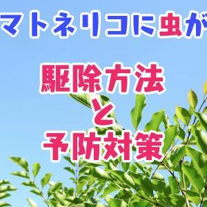 庭木のシマトネリコに虫が…駆除方法と予防対策【大量のフン】