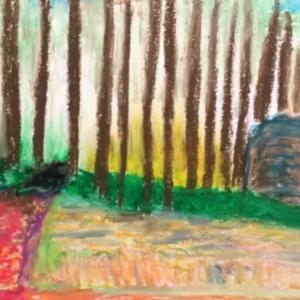 森の樹木の隙き間