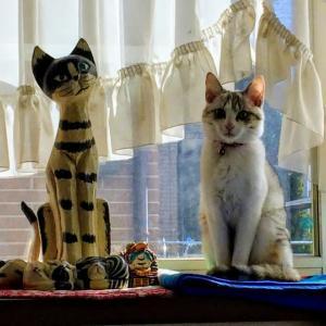 猫 2ショット