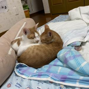 子猫もいいけど大人猫も(^з^)-☆その2