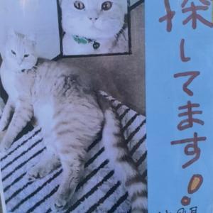 迷子の猫の情報と今日の我が家。