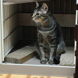 保護主さんが頑張ったラッキーな野良猫(. ❛ ᴗ ❛.)