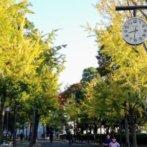 大阪城公園の紅葉2019【イチョウ並木の黄葉】