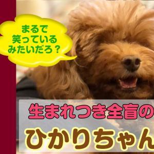 【Youtubeひかりちゃんねる】思い切り走れる環境って犬にとって大切なことでしょ!?