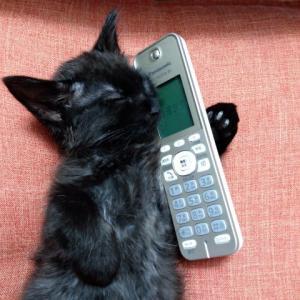 電話番号についてご報告
